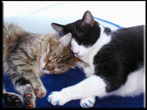 chateauguay chat sites Mondou propose une foule de produits et de services en magasin pour le bien- être de votre animal achetez maintenant en ligne sur notre nouveau site.
