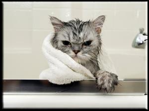 Toilettage pour chat montreal for Salon de toilettage montreal